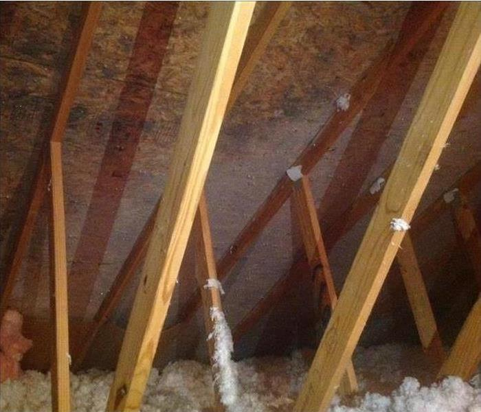 Mold in Lansing Area Attic